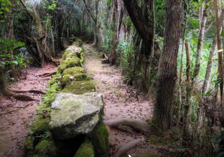 Caminhada no Bosque Mãe d´água